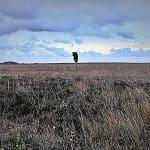 Regiofilms Jan Menger in teken van natuur