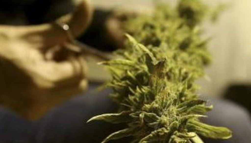 cannabis-medicijn-620x204