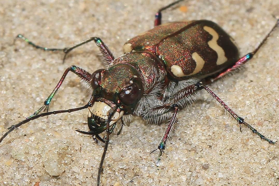 23-6-2018 Insecten Blesdijkerheide