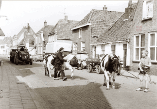 stadsboerderij