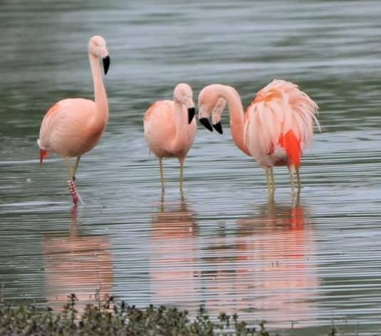 Flamingo-Zwolle---Angela-Nieuwveld-9-