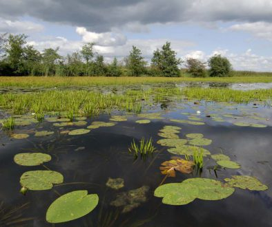 ©Philip Friskorn-trekgat waterlelies krabbescheer