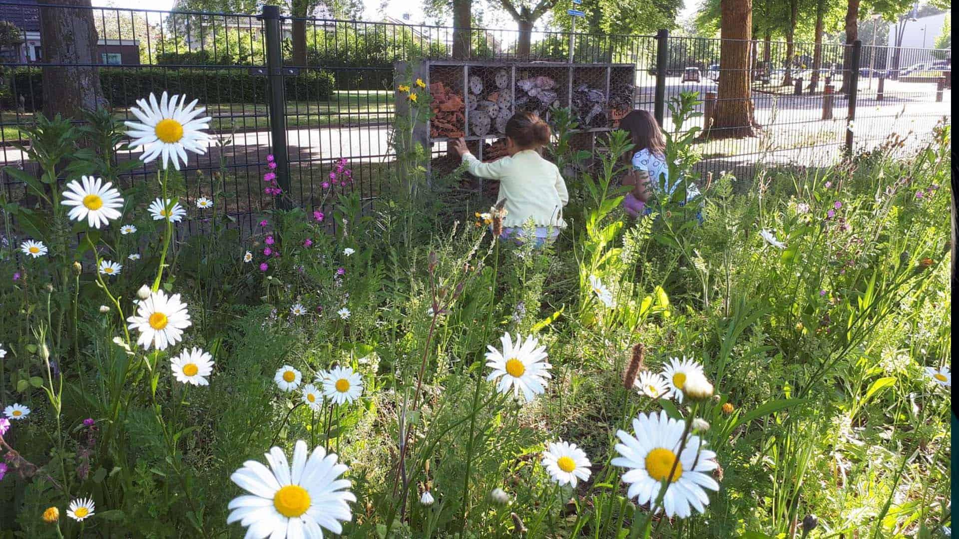 Bijenplek bij basisschool Het Avontuur in Dalfsen